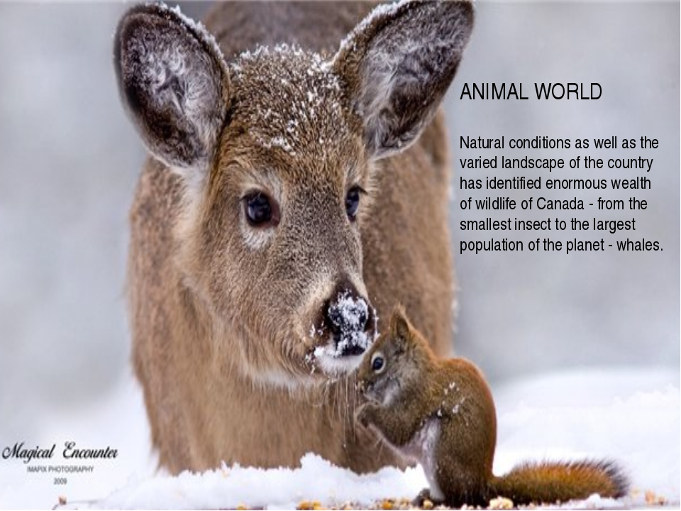 ANIMAL WORLD Natural conditions as well as the varied landscape of the count...