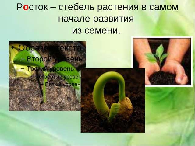 Росток – стебель растения в самом начале развития из семени.