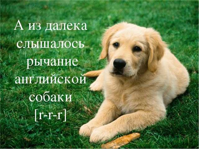 Глийской собаки А из далека слышалось рычание английской собаки [r-r-r]