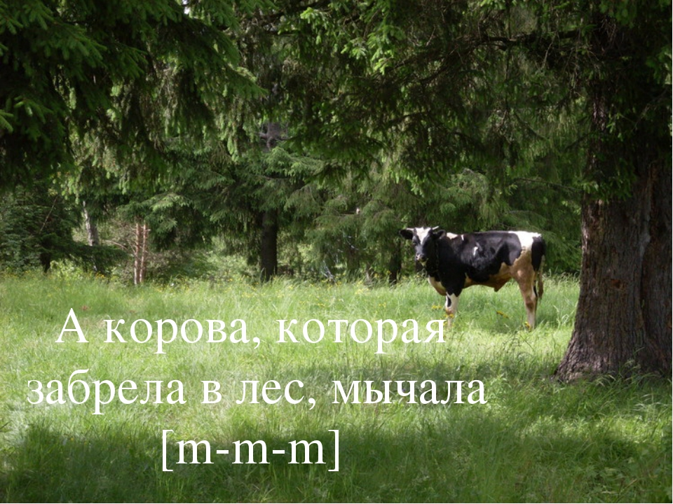 А корова, которая забрела в лес, мычала [m-m-m]