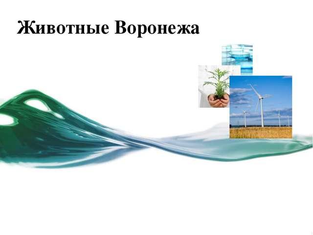 Животные Воронежа Щелкните для изменения Этот шаблон можно использовать как н...