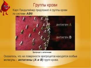 Группы крови Оказалось, что на поверхности эритроцитов находятся особые молек