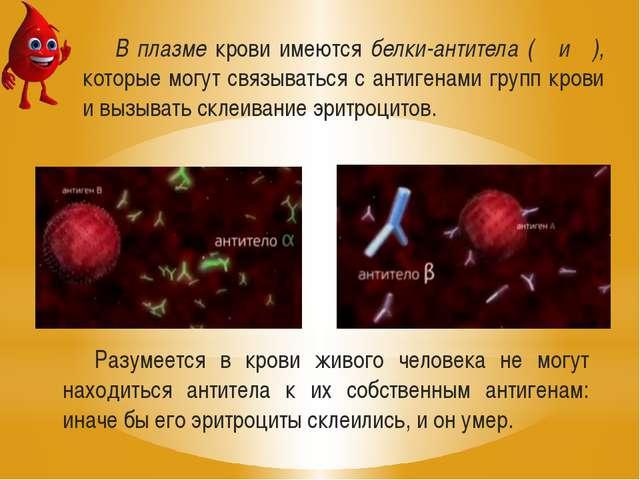 В плазме крови имеются белки-антитела (α и β), которые могут связываться с ан...
