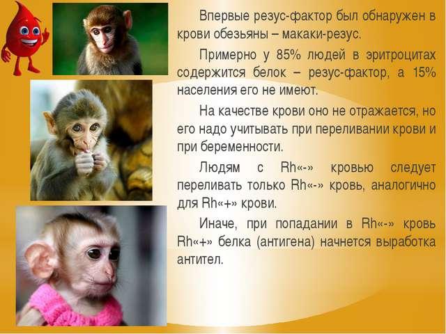 Впервые резус-фактор был обнаружен в крови обезьяны – макаки-резус. Примерно...