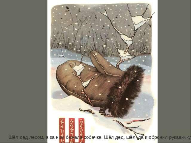 Шёл дед лесом, а за ним бежала собачка. Шёл дед, шёл, да и обронил рукавичку.