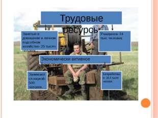 Трудовые ресурсы Занятые в домашнем и личном подсобном хозяйстве- 25 тысяч че