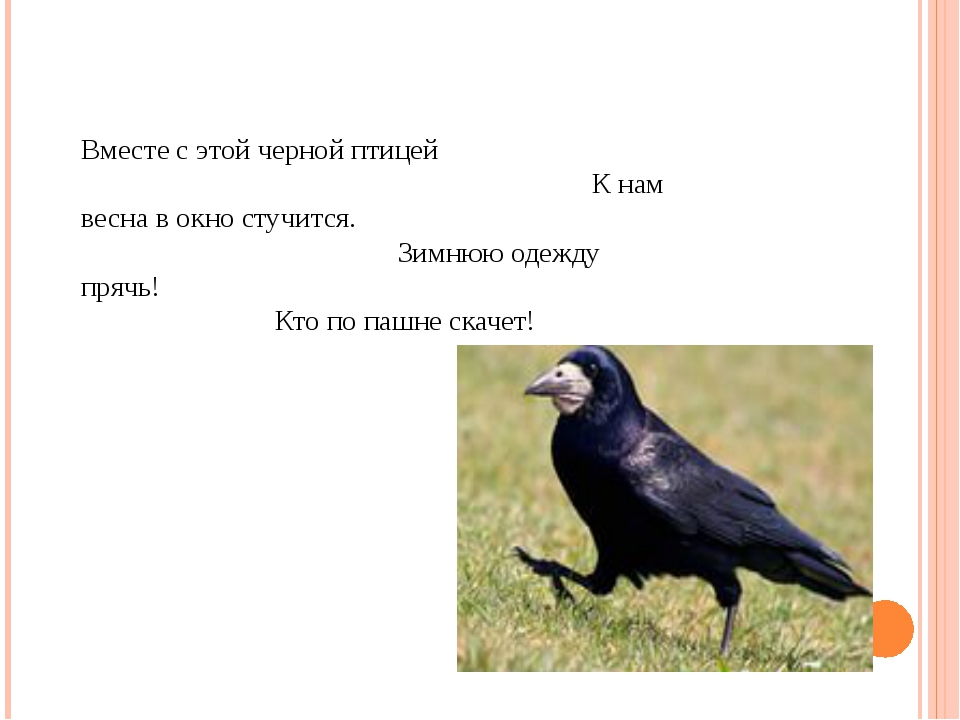 Вместе с этой черной птицей К нам весна в окно стучится. Зимнюю одежду прячь!...