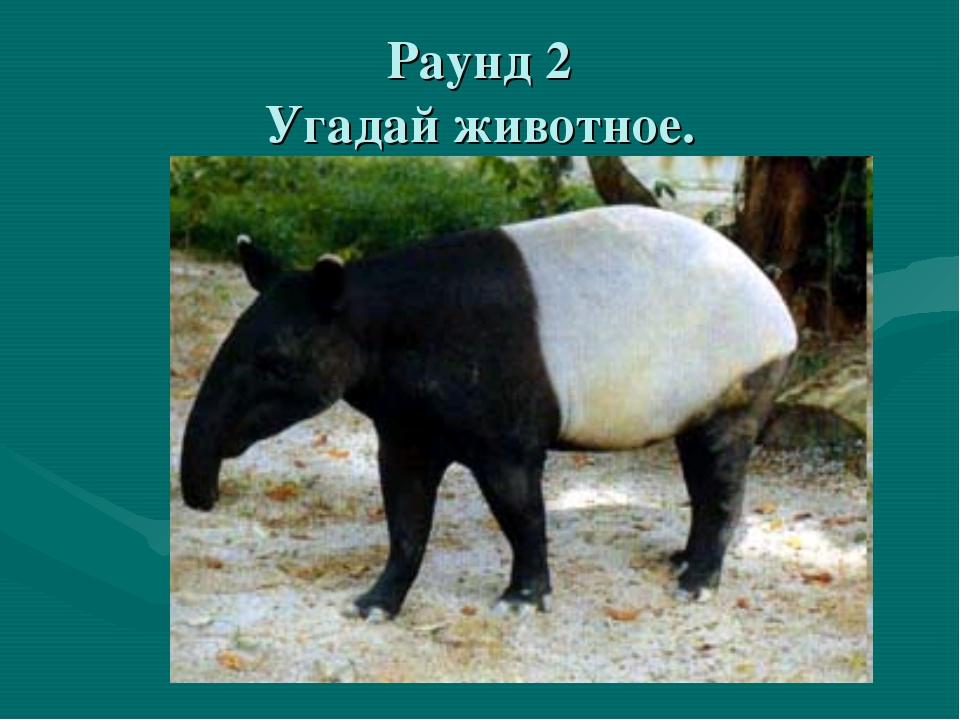 Раунд 2 Угадай животное.