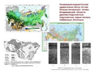 Почвенный покров России удивительно пёстр. Но нас больше интересуют почвы Вла