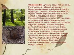 Обнажение №3- дубрава. Серые лесные почвы. Растительность –абсолютный суходол