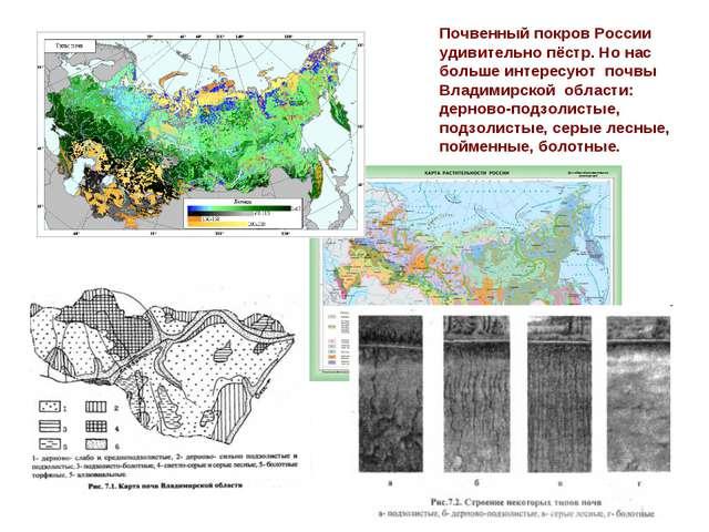 Почвенный покров России удивительно пёстр. Но нас больше интересуют почвы Вла...