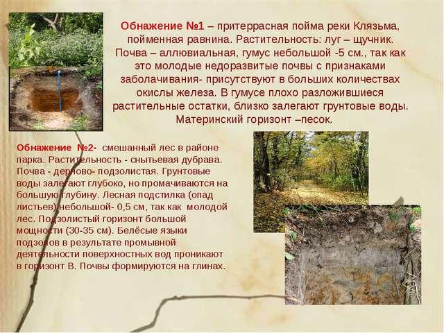 Обнажение №1 – притеррасная пойма реки Клязьма, пойменная равнина. Растительн...