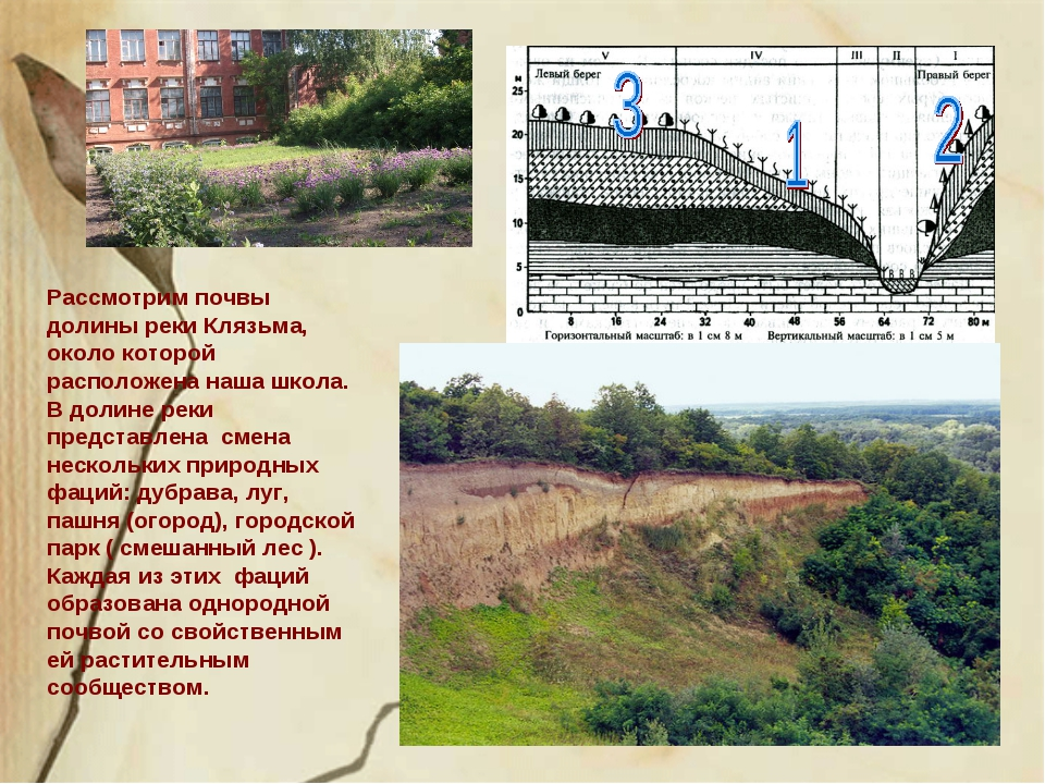 Рассмотрим почвы долины реки Клязьма, около которой расположена наша школа. В...