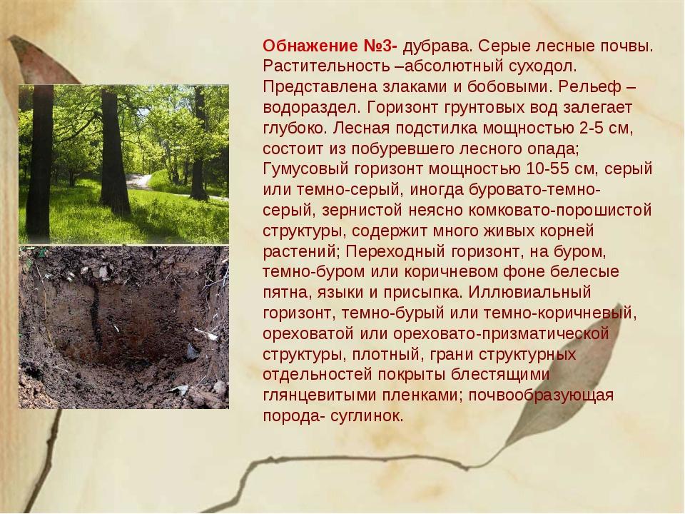 Обнажение №3- дубрава. Серые лесные почвы. Растительность –абсолютный суходол...