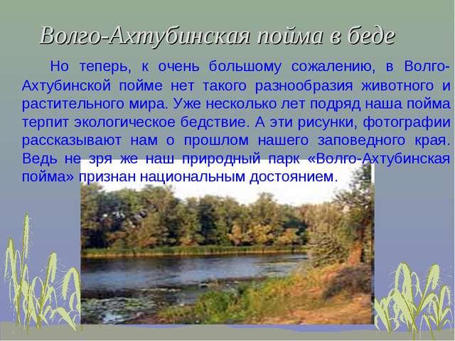 Волго-Ахтубинская пойма в беде Но теперь, к очень большому сожалению, в Волго...