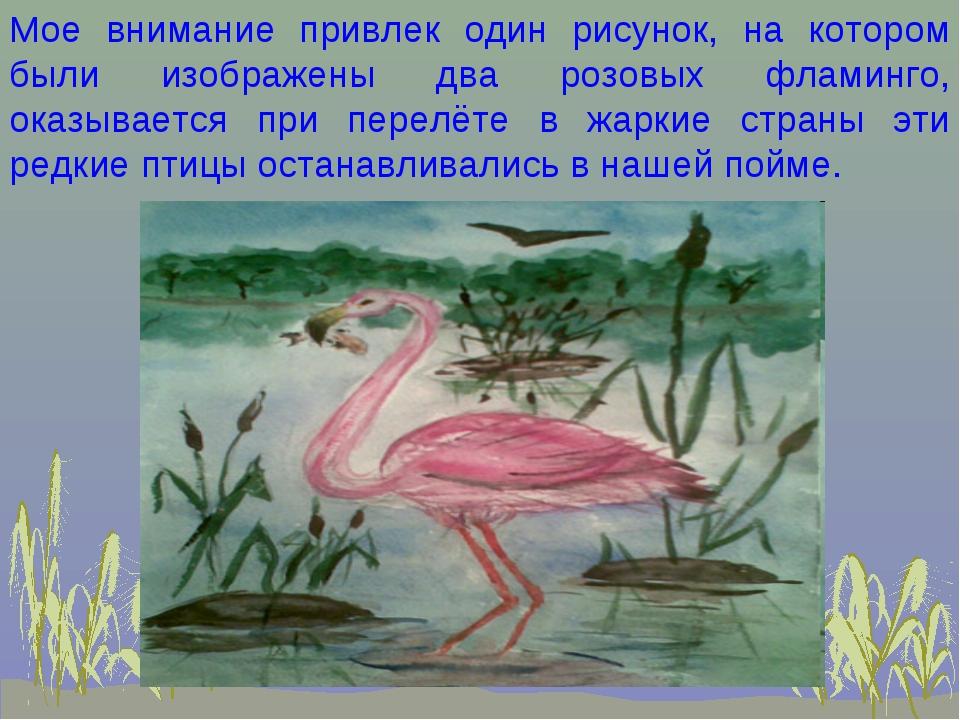 Мое внимание привлек один рисунок, на котором были изображены два розовых фла...