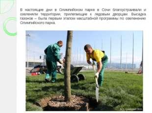 В настоящие дни в Олимпийском парке в Сочи благоустраивали и озеленяли террит