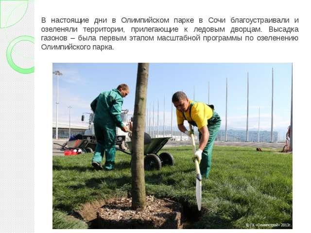 В настоящие дни в Олимпийском парке в Сочи благоустраивали и озеленяли террит...