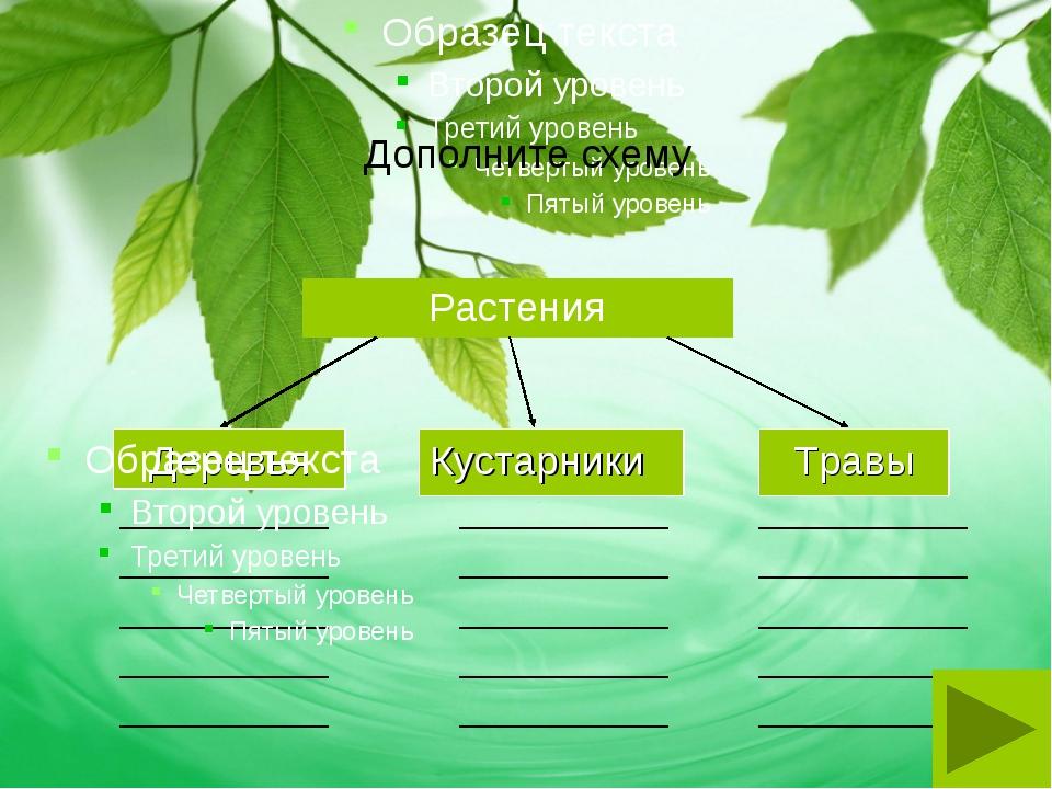 Дополните схему Растения