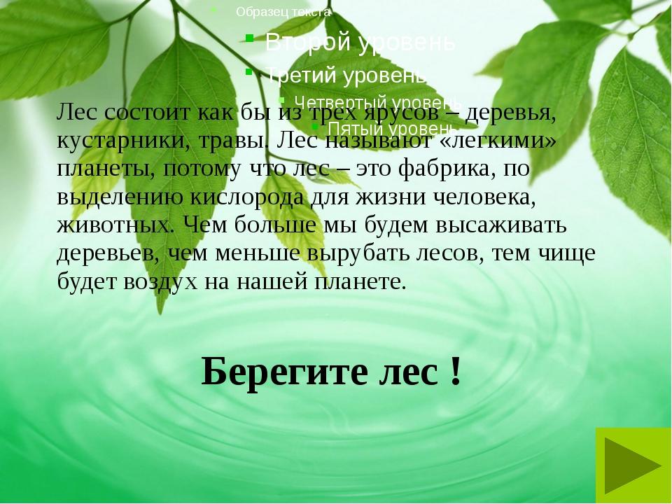 Берегите лес ! Лес состоит как бы из трех ярусов – деревья, кустарники, травы...