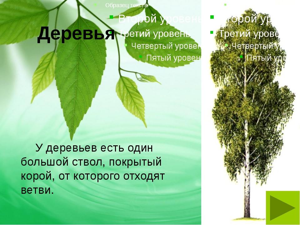 Деревья У деревьев есть один большой ствол, покрытый корой, от которого отхо...
