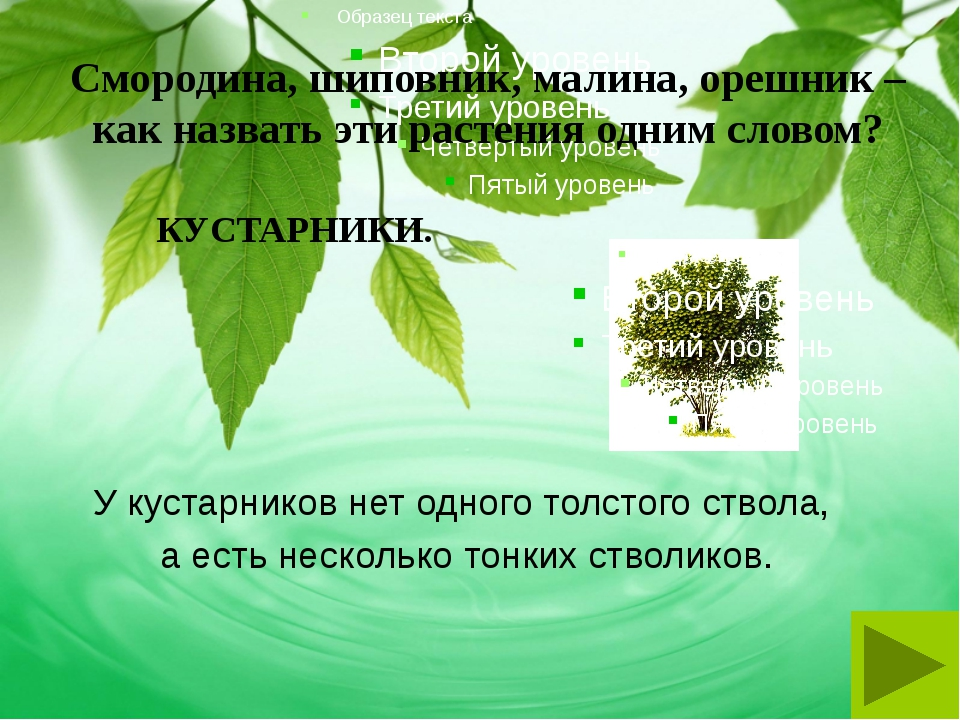 Смородина, шиповник, малина, орешник – как назвать эти растения одним словом?...