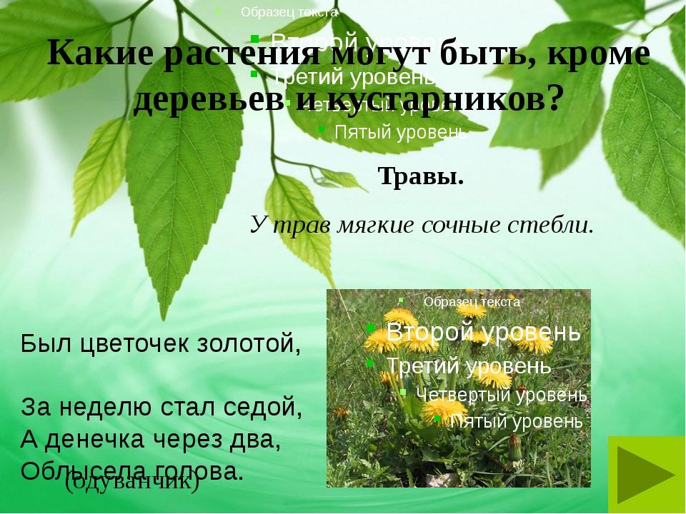 Какие растения могут быть, кроме деревьев и кустарников? Травы. Был цветочек...