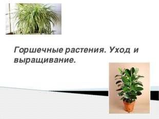 Горшечные растения. Уход и выращивание.