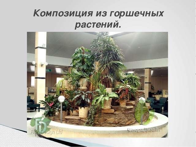 Композиция из горшечных растений.