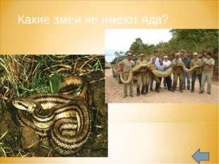 Какие змеи не имеют яда?