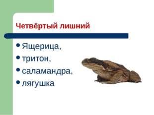 Четвёртый лишний Ящерица, тритон, саламандра, лягушка