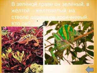 В зелёной траве он зелёный, в жёлтой – желтоватый, на стволе дерева он корич
