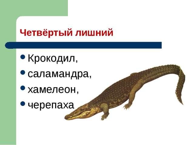 Четвёртый лишний Крокодил, саламандра, хамелеон, черепаха