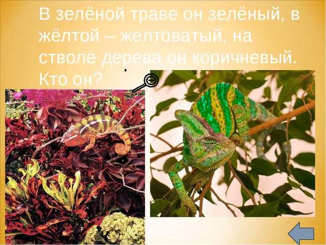 В зелёной траве он зелёный, в жёлтой – желтоватый, на стволе дерева он корич...
