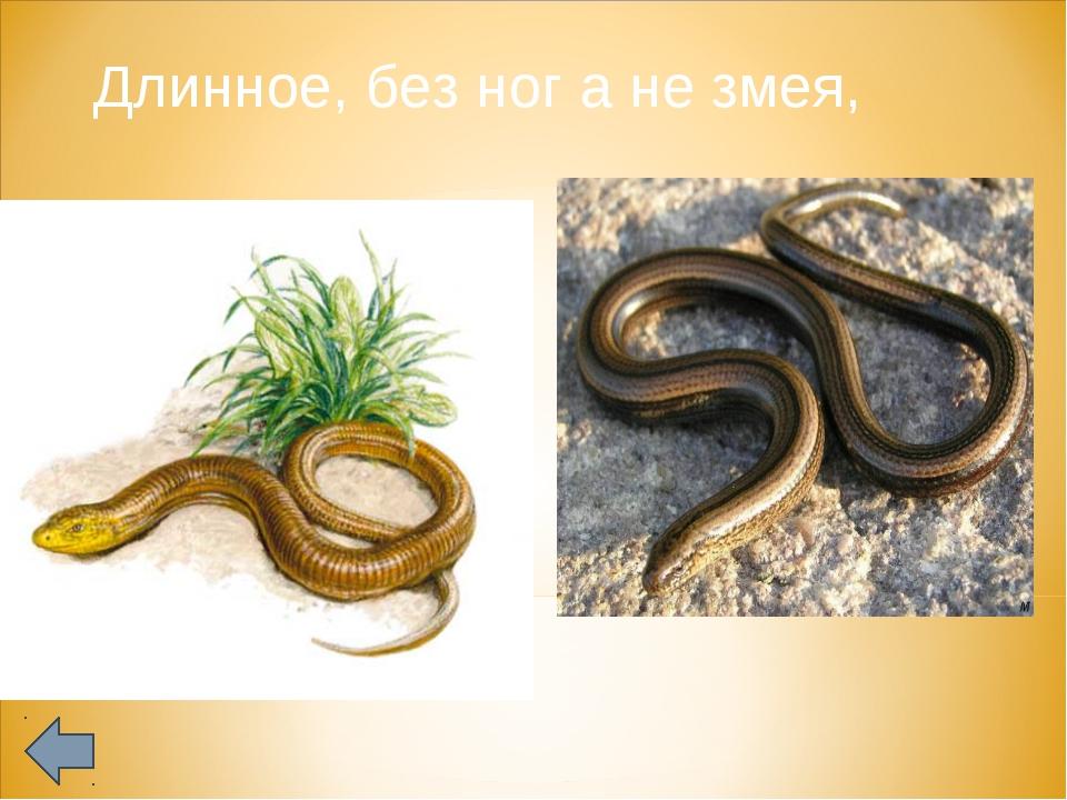 Длинное, без ног а не змея,