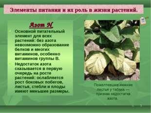 * Элементы питания и их роль в жизни растений. Азот N Основной питательный эл