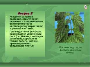 * Фосфор Р Ускоряет развитие растений, стимулирует цветение и плодоношение, б