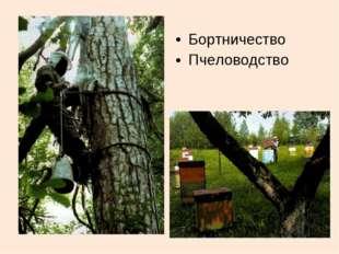 Бортничество Пчеловодство