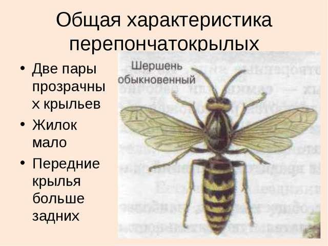 Общая характеристика перепончатокрылых Две пары прозрачных крыльев Жилок мало...