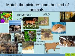 Match the pictures and the kind of animals. WILD DOMESTIC