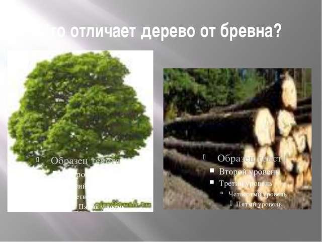 Что отличает дерево от бревна?