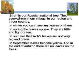 Birch is our Russian national tree. They are everywhere in our village, in o