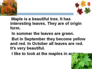 Maple is a beautiful tree. It has interesting leaves. They are of origin for