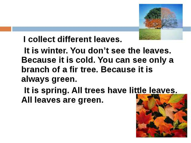 I collect different leaves. It is winter. You don't see the leaves. Because...