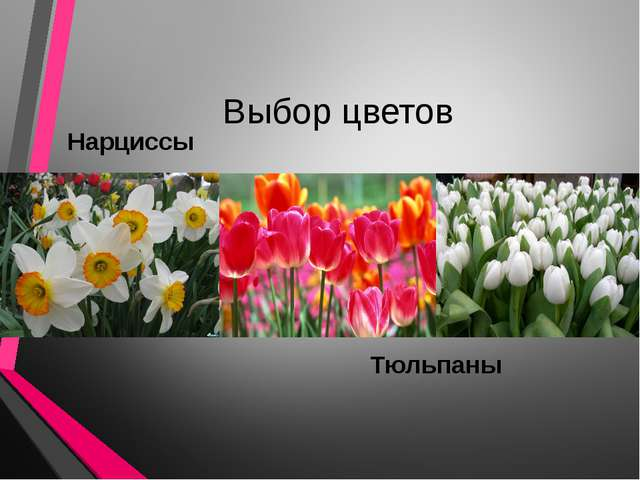 Выбор цветов Нарциссы Тюльпаны