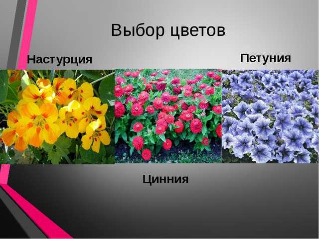 Выбор цветов Настурция Петуния Цинния