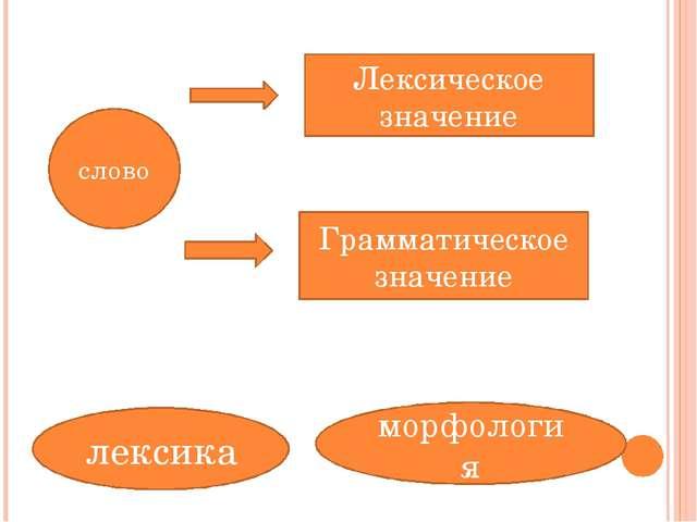 слово Лексическое значение Грамматическое значение лексика морфология