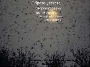 Вечером много комаров налетело — завтра будет дождь.