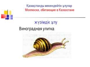 Қазақстанды мекендейтін ұлулар Моллюски, обитающие в Казахстане жүзімдік ұлу