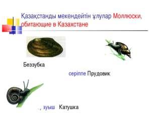 Қазақстанды мекендейтін ұлулар Моллюски, обитающие в Казахстане Беззубка сері